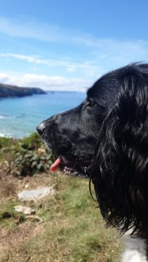 Looking out to sea (Credit - Cornish Holiday)